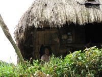 Traditional Igorot houses have thatched roof of cogon grass and stand on stilts, such that the floor is about one and a half meter above the ground.